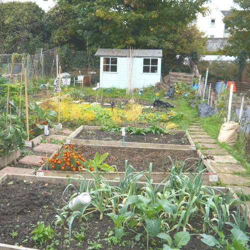 Allotment plot